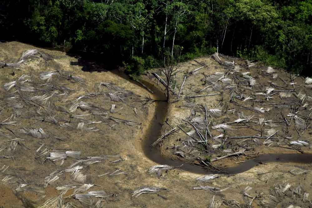 O desmatamento na região oeste do Amazonas (Foto:  Alberto César Araújo)