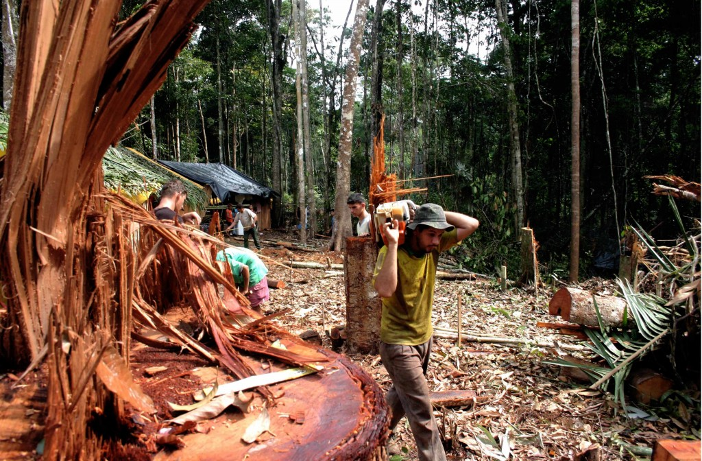 Desmatamento da floresta amazônica em Apuí (AM). Foto: Alberto César Araújo