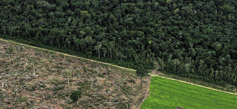 Alertas indicam alta no desmatamento da Amazônia
