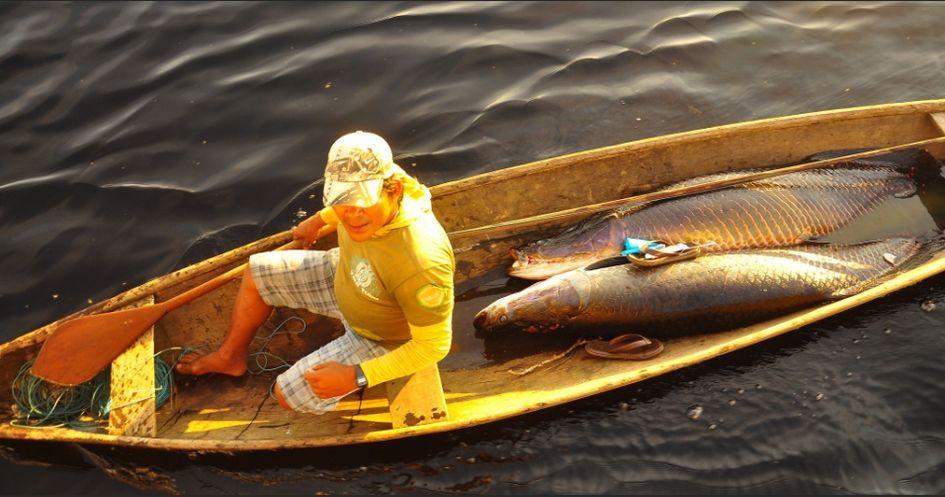 Pesca do Pirarucu é proibida no Amazonas desde 1996