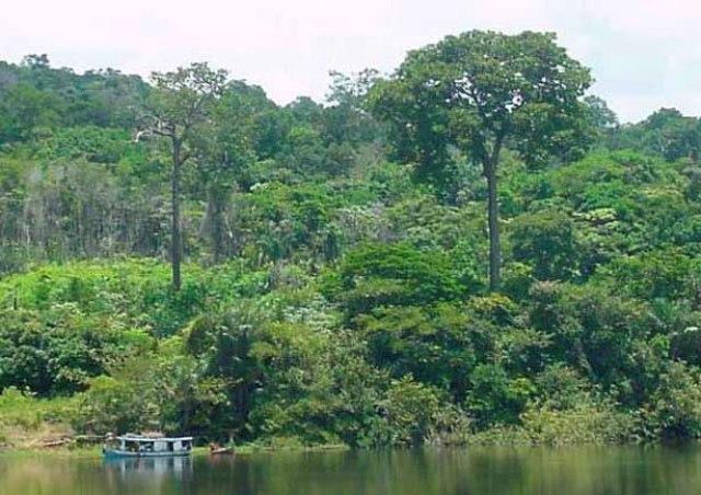 Flora da Amazônia tem 87 espécies ameaçadas de extinção