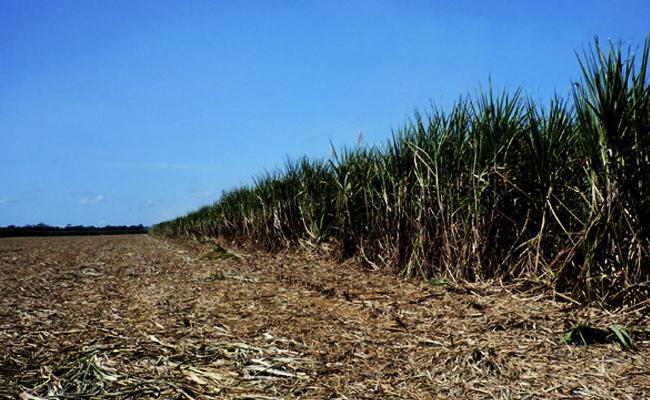 Ação de Bolsonaro e indústria de cana-de-açúcar ameaçam a Amazônia, Pantanal e o Clima Global