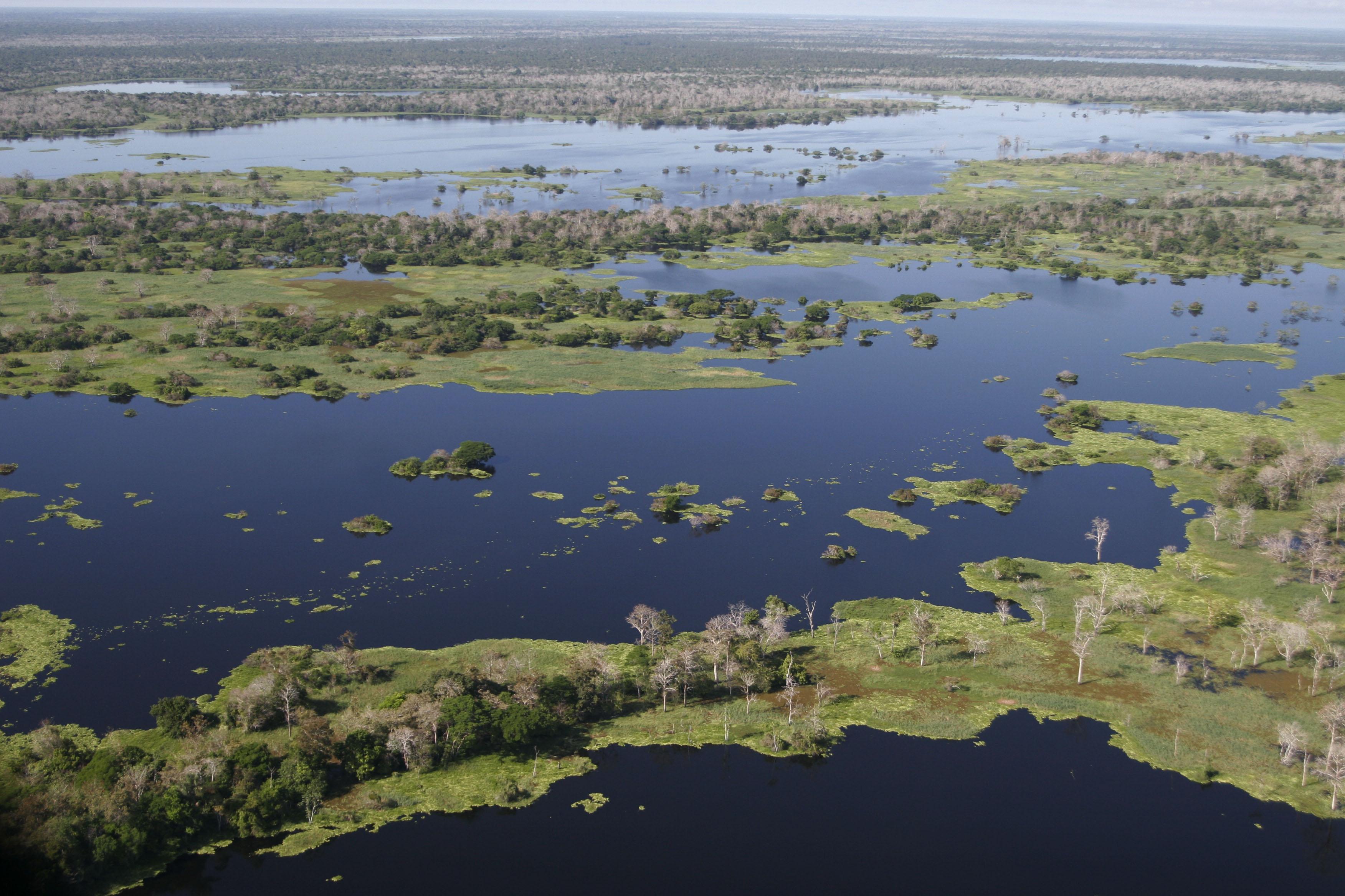 COP13: ONU quer que biodiversidade entre nos temas da política pública e econômica