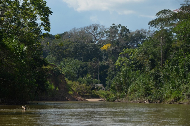 Terra Indígena dos Yawanawa no Acre. (Foto: Odair Leal)