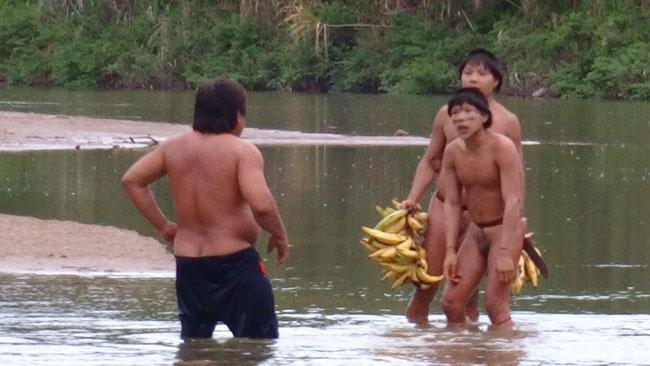 Índios isolados recebem banana de Ashaninka (Foto: Divulgação Funai)