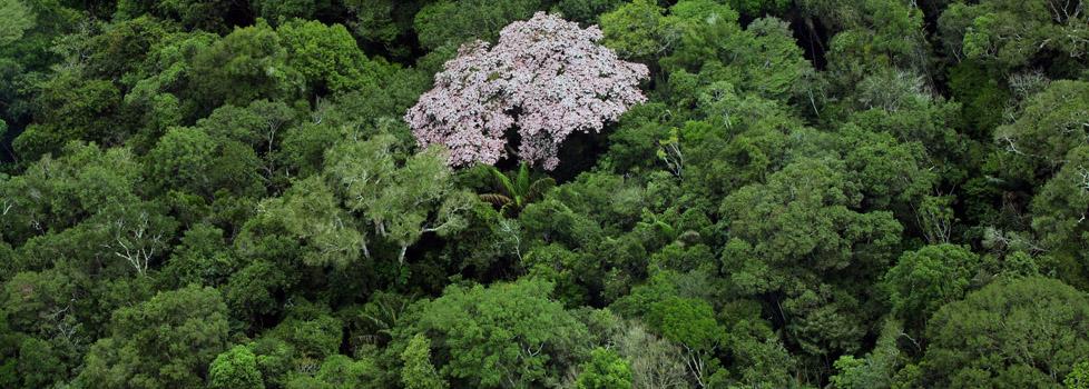 O Amazonas tem 27% de sua área em florestas protegidas (FotoAmazonas: Alberto César Araújo)