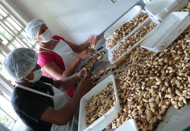 Seleção de castanha dentro da Central Caumoru (Foto: Tarcísio Magdalena/FVA)