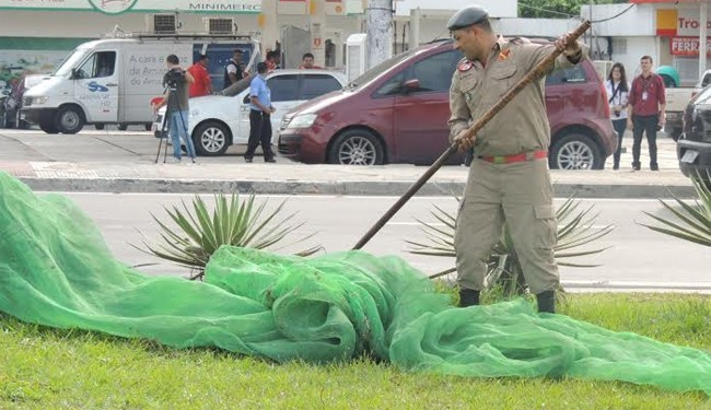 Após protestos, Ipaam retira telas de palmeiras que impediam pouso de periquitos