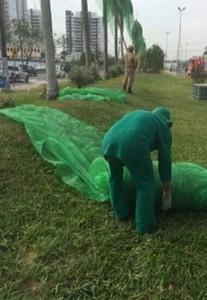 Bombeiro e funcionário do Ipaam retiram telas das palmeiras imperiais (Foto: Lyssia Machado)