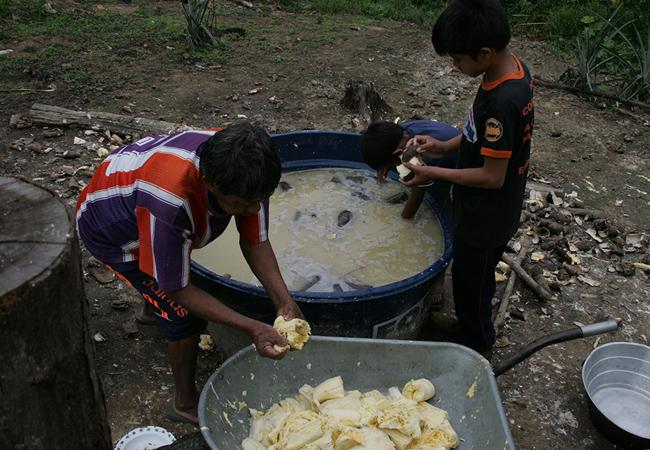 Aruká prepara a mandioca com o neto Kuãimbu (Foto: Odair Leal/AR)