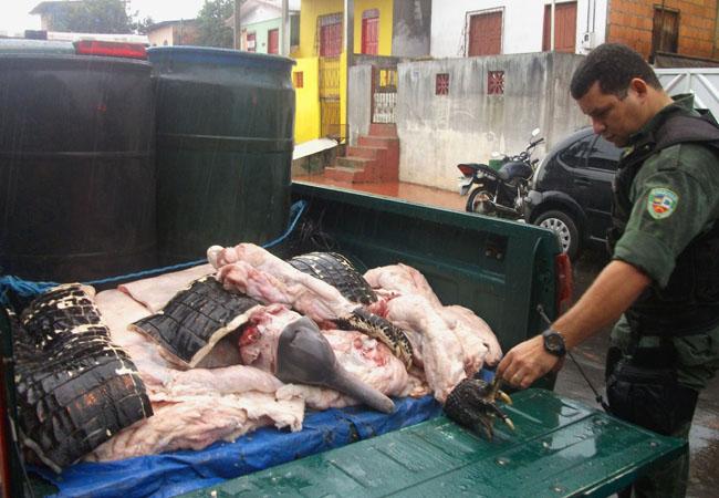 Botos e jacarés abatidos por pescadres e apreendidos pela polícia ambiental do Amazonas (Foto: BPAmb)