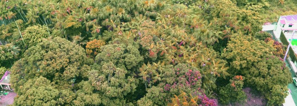 Área verde é  habitat de periquitos,gaviões,   beija-flores, preguiças e outras espécies. (Foto: Carmem Florêncio/AmReal)