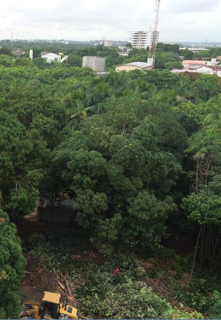 Trator faz terraplanagem para Implantar centro comercial em área verde (Foto: Carmem Florêncio/AmReal)