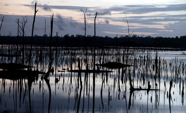 Palestrantes farão alerta sobre a devastação da floresta em debate da Amazônia Real