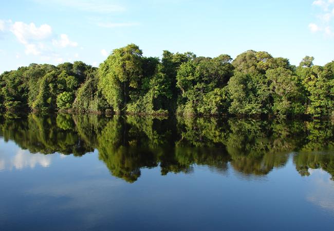 Parque de Anavilhanas em Novo Airão, Amazonas. (Foto: Carlos Durigan)