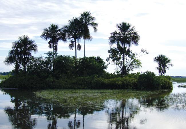 O Amapá é o Estado que tem menor taxa de desmatamento (Foto: CI- Brasil)
