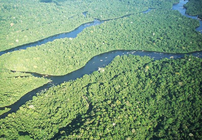 Amapá, estado que menos desmata, ganha fundo para gestão de florestas