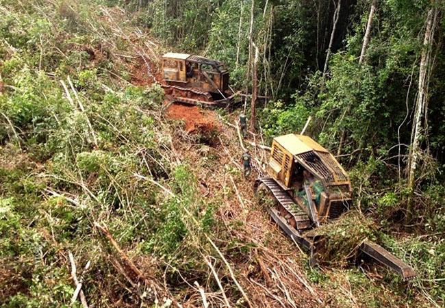 Área onde projeto de manejo foi fraudados por engenheiros no Mato Grosso (Foto: Divulgação Ibama)