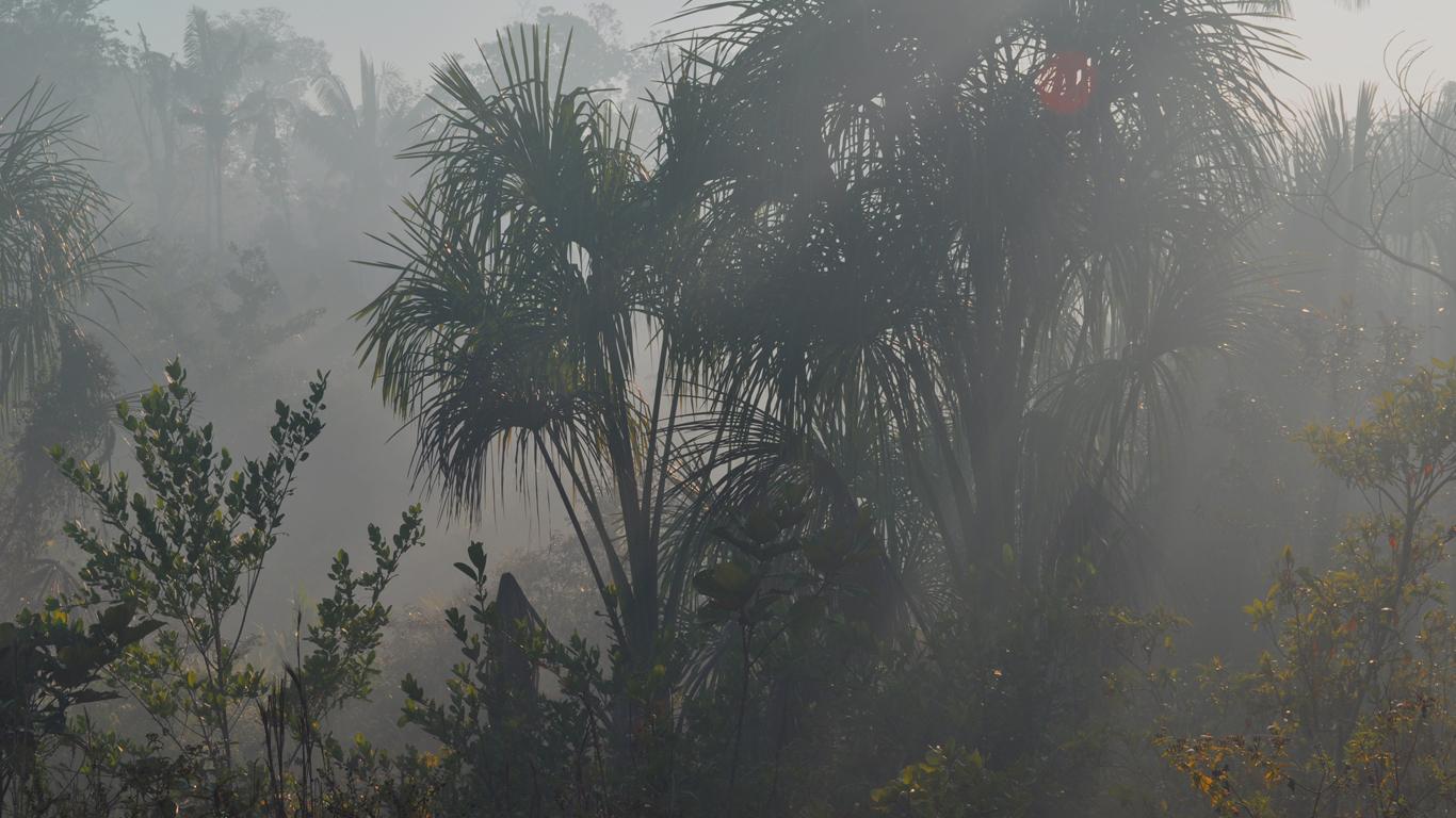 Floresta em Iranduba tomada pela fumaça de queimadas (Foto: Carlos Durigan)