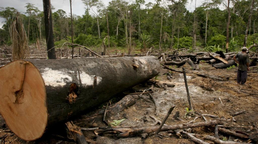 Extração ilegal de madeira no Sul de Lábrea. (Foto: Alberto César Araújo/2007)