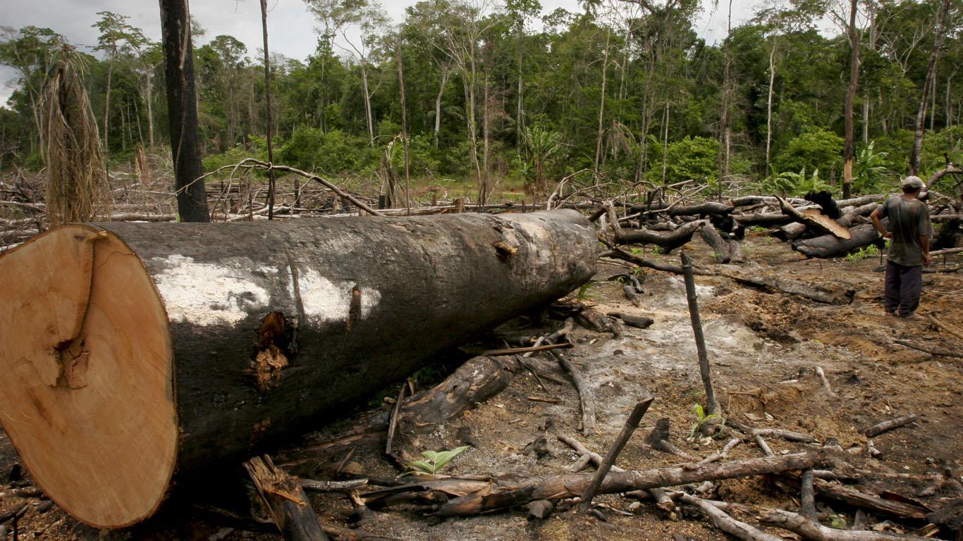 Polícia de Rondônia localiza agricultores e diz que eles foram torturados por madeireiros