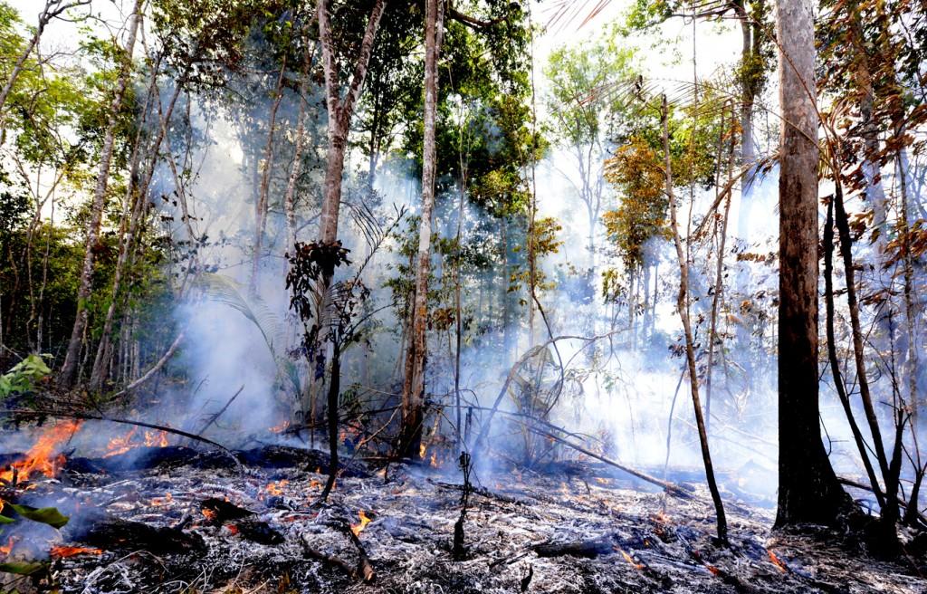 Em Manaquiri o fogo tomou conta da floresta (Foto: Chico Batata)