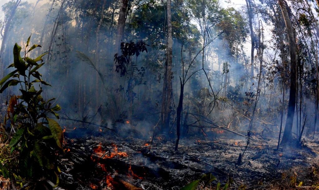Queimada em Autazes, sul do Amazonas (Foto: Chico Batata)