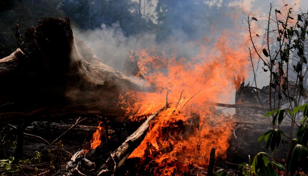 Floresta incendiada no entorno da BR-319, em Autazes (Foto: Chico Batata)