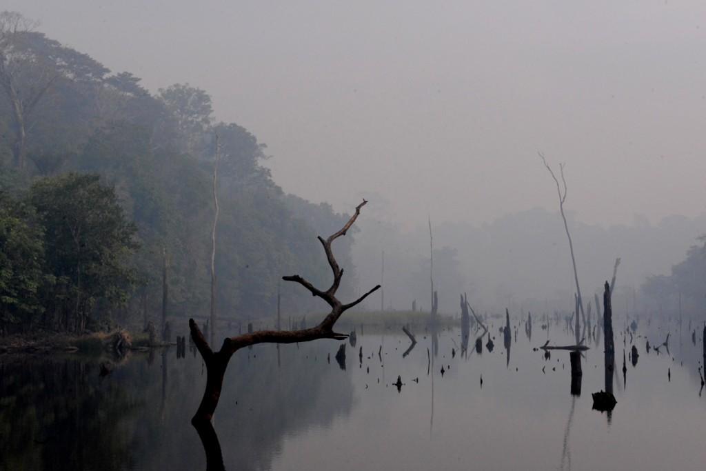 Floresta desmatada no entorno da BR 319 (Foto: Chico Batata/2015)