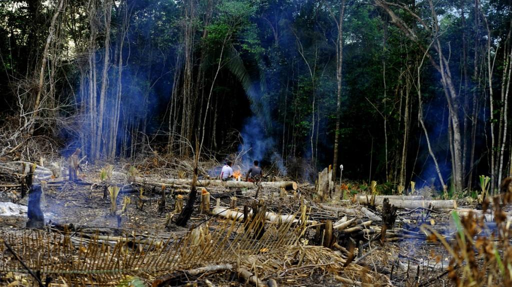 Desmatamento e queimada em Manaquiri, no sul do Amazonas (Foto:Chico Batata/2015)