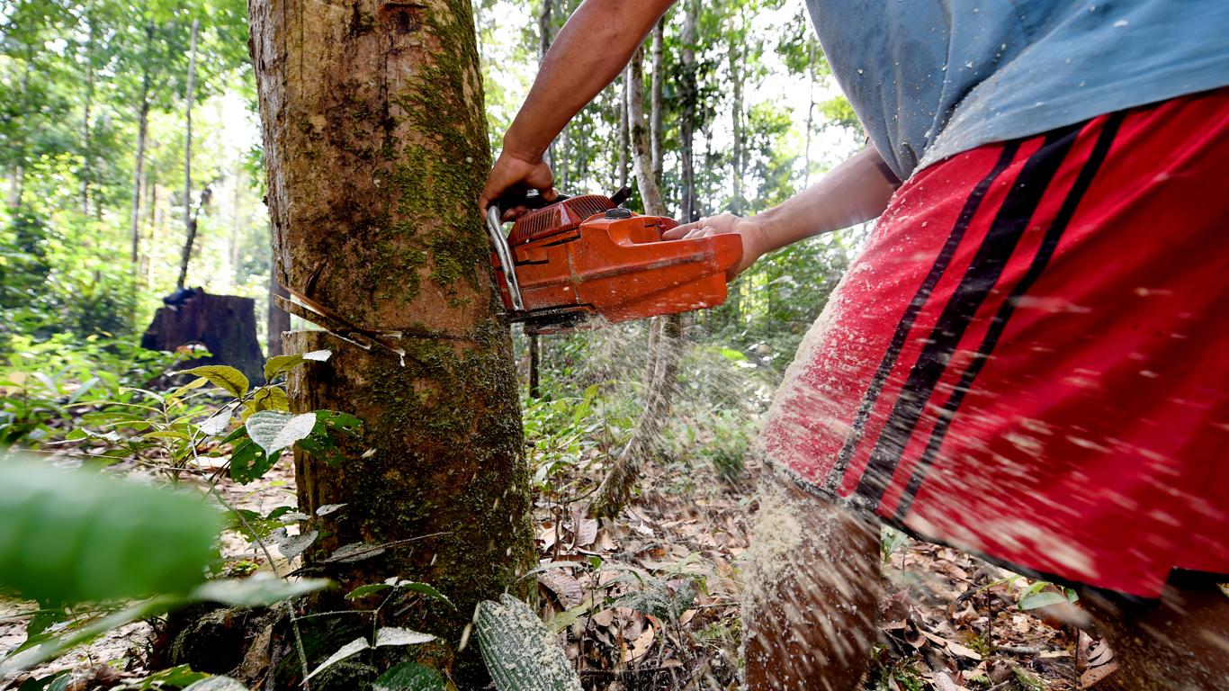 Rumo à COP 21, governador do Amazonas defende uso de motosserra na floresta