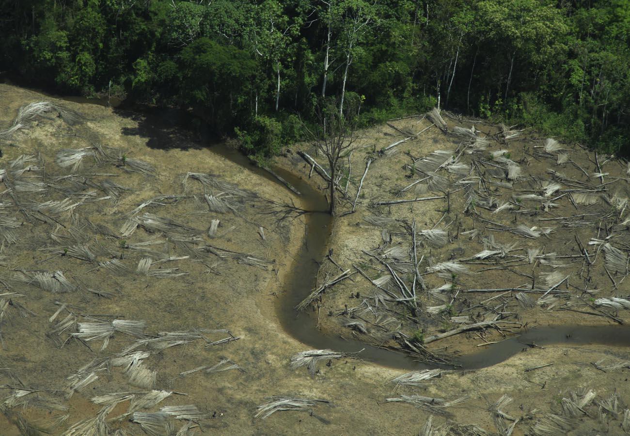 O fim da Amazônia