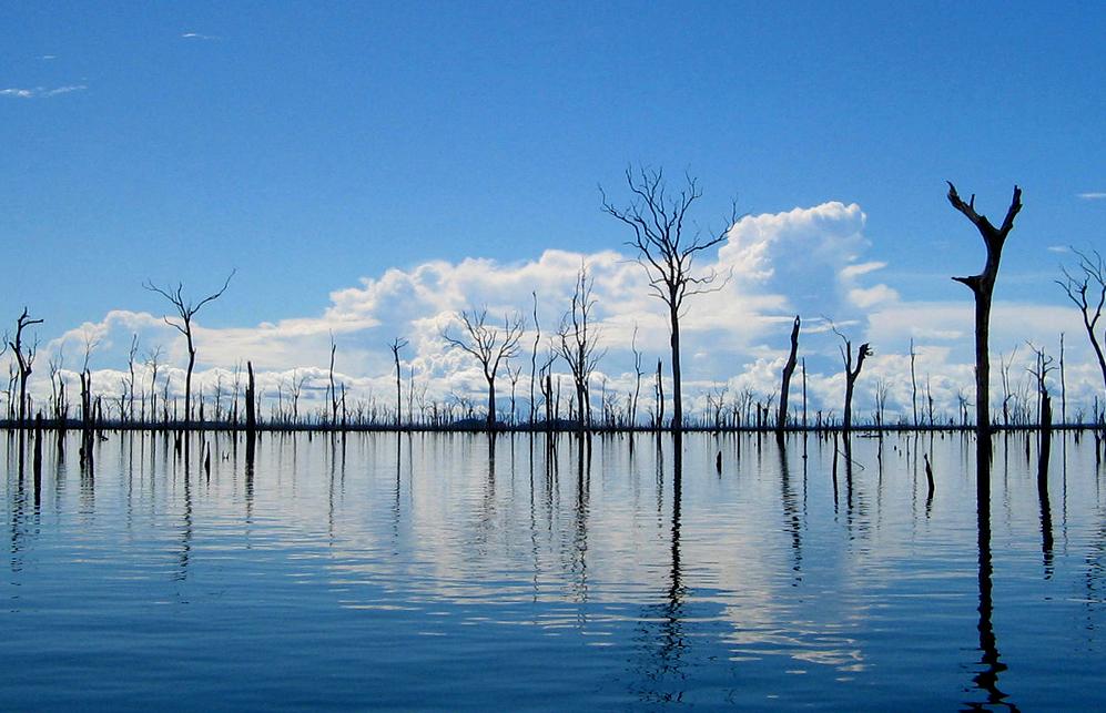 Hidrelétricas e Aquecimento Global – 4: Dióxido de carbono de árvores mortas
