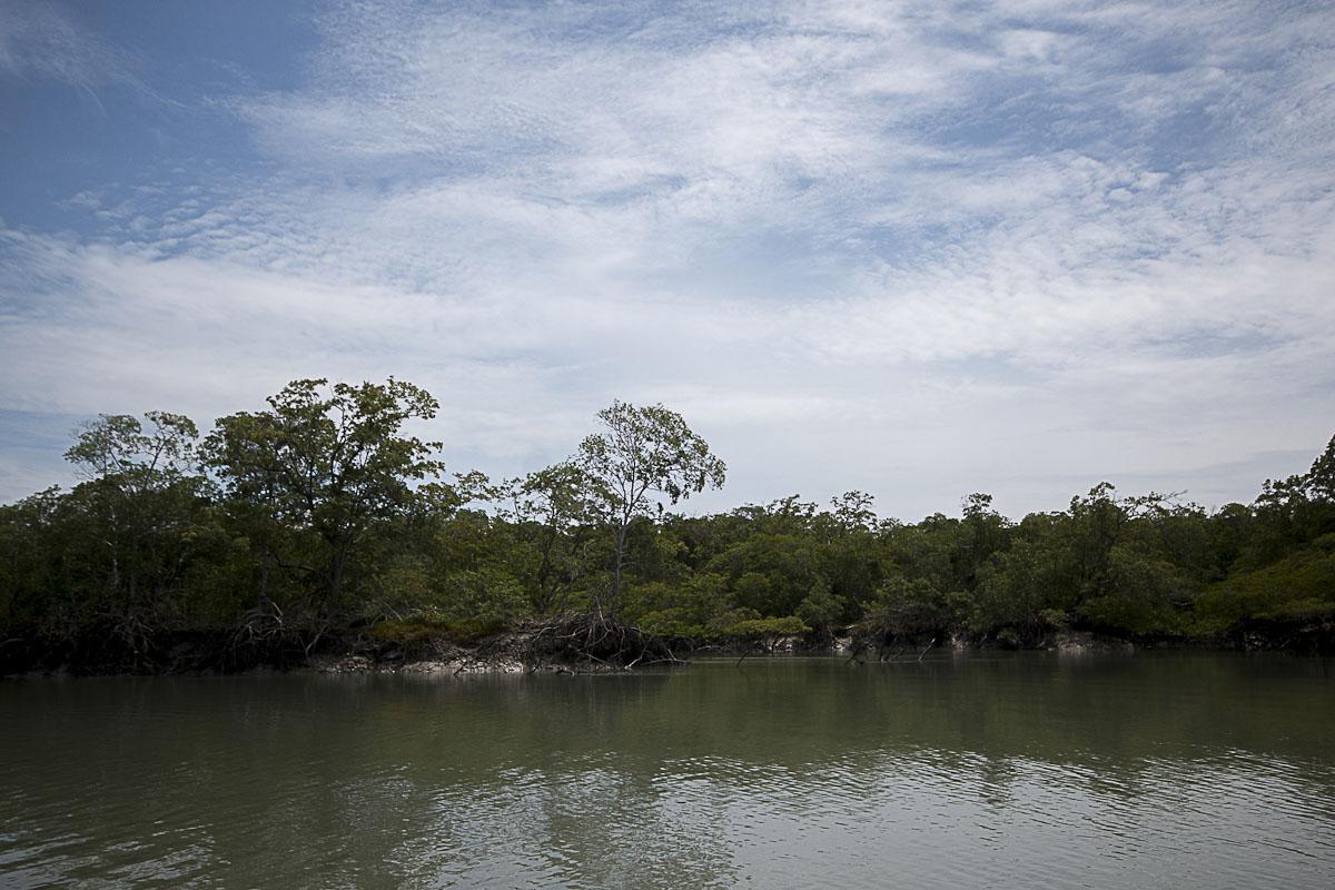 Floresta de Manguezal às margens do Igarapé do Puca, Alcântara, Maranhão. (Foto Ana Mendes/AmReal)