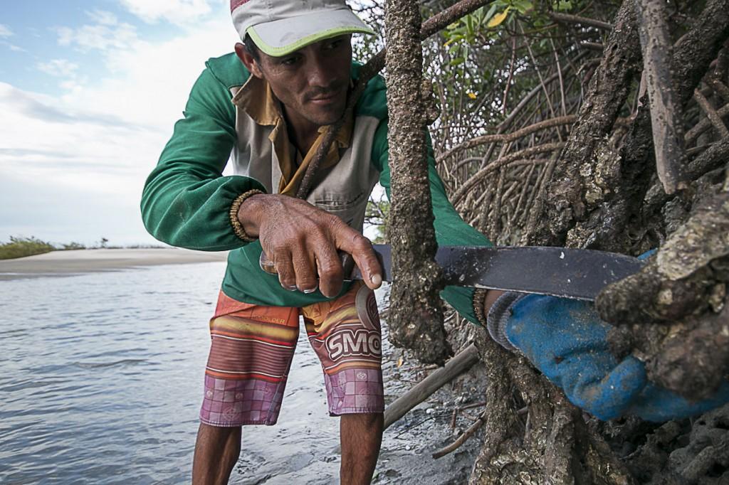 Fanksinatra Freitas é catador de ostras em Raposa, região metropolitana de São Luís. (Foto: Ana Mendes/AmReal)