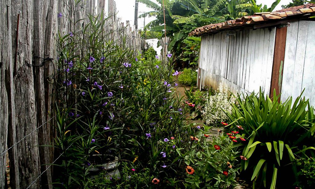 Quintal de David Ferreira de Souza Filho (Foto: Floriano Lins/AmReal)