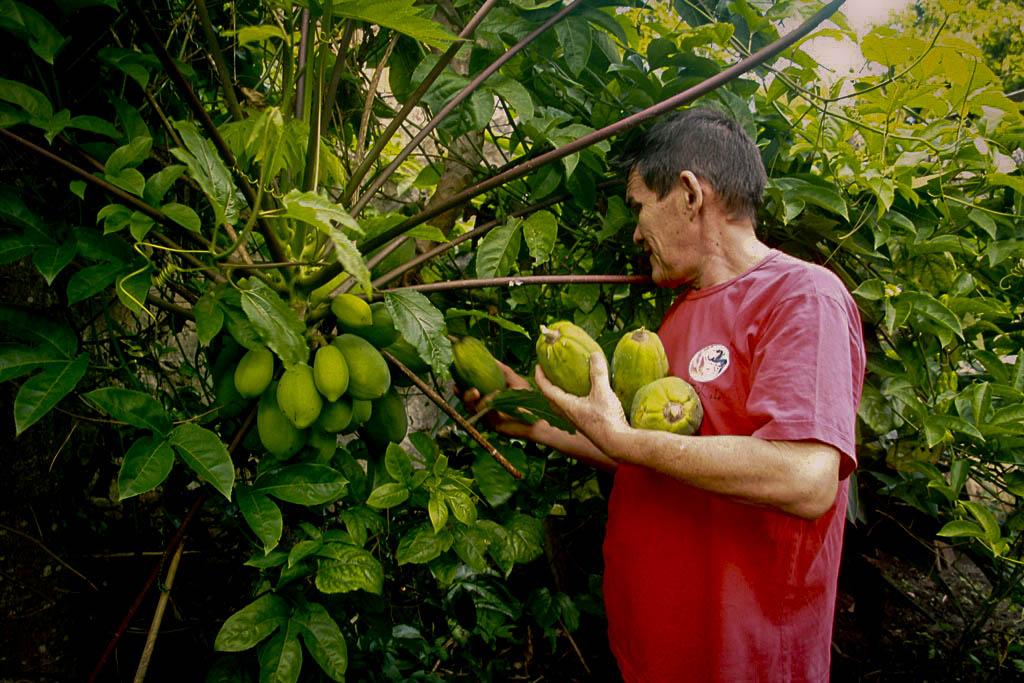Frutas como o mamão são cultivas pelo professor Paulo Roberto Macedo (Foto: Floriano Lins/AmReal)