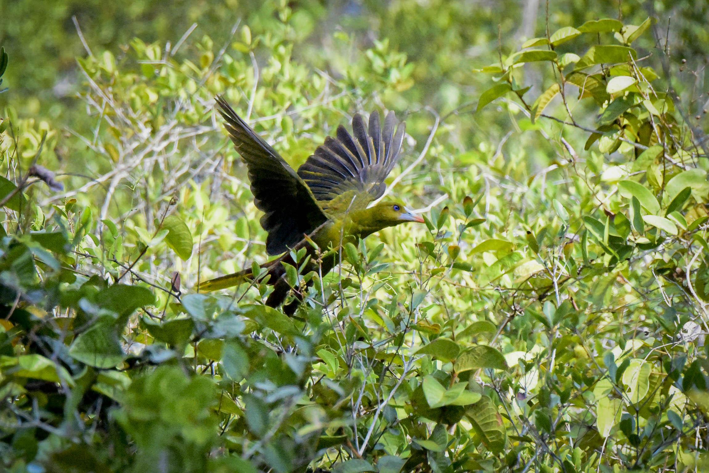 Pássaros fugiram de queimadas no Parque do Viruá, em Roraima
