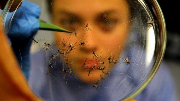Pesquisadora  em estudo sobre os mosquitos Aedes Aegypti. (Foto: Fiocruz)