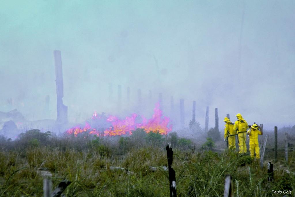Brigadistas combatendo incêndio na zona rural de Caracaraí em março de 2016  (Foto: Paulo Gois/AmReal)