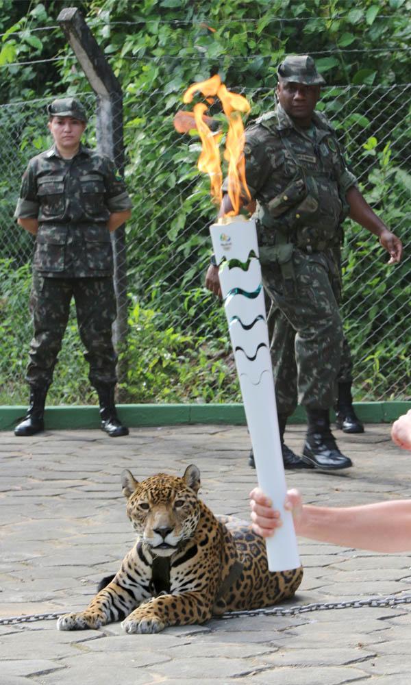 Ao menos dez militares faziam a segurança da onça-pintada Juma, mas a corrente soltou (Foto: Jair Araújo/D24)
