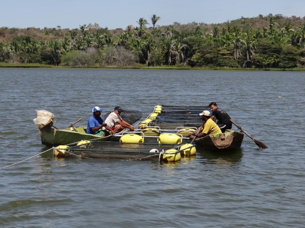 Produção de tilápia em Rondônia (Foto: Embrapa)