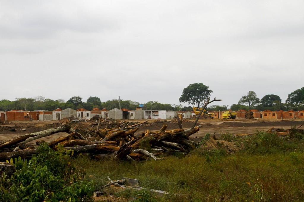 Castanheiras foram derrubadas para obras do Minha Casa, Minha Vida, em 2011 (Foto: Alberto César Araújo)