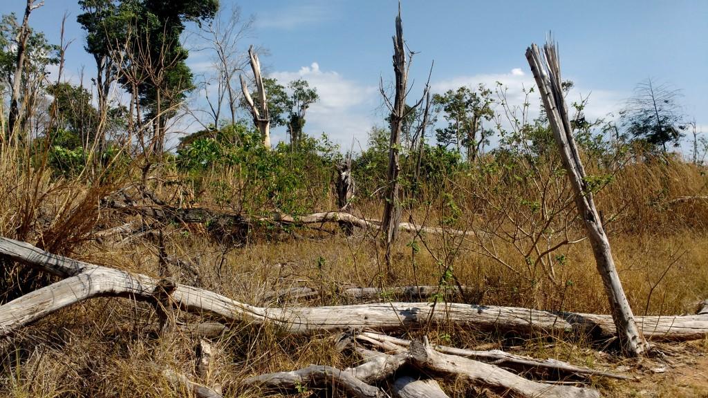 Área queimada em 2010 continua impactada (Foto: Fábio Pontes/Amazônia Real)