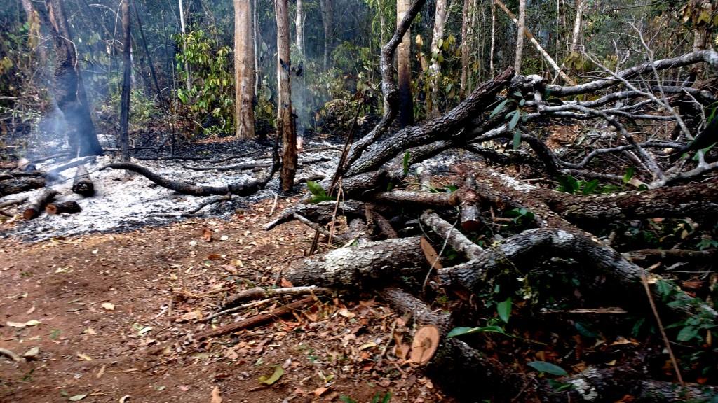 Área queimada da fazenda Tanguro, no Mato Grosso (Foto: Fábio Pontes/Amazônia Real)