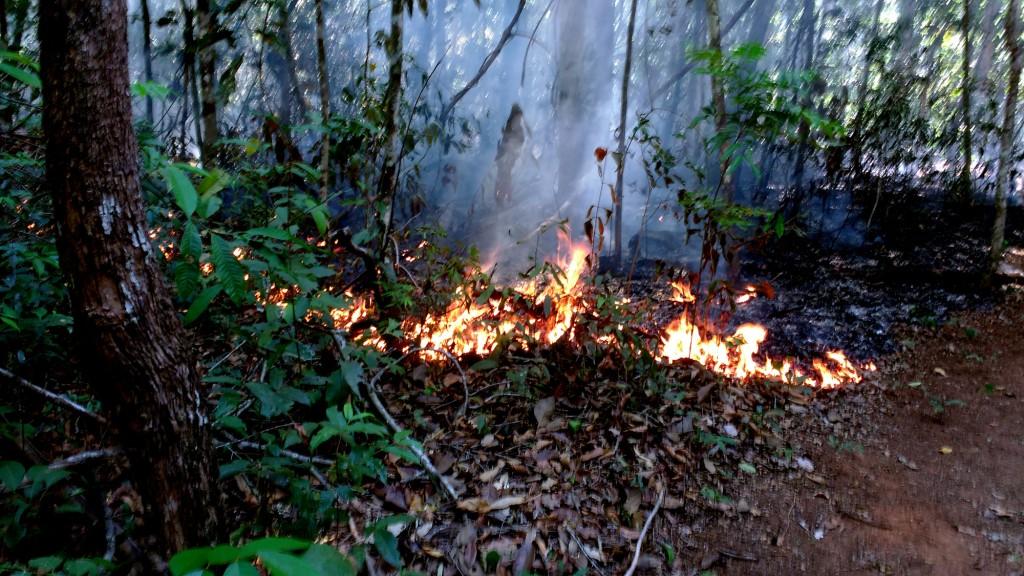 Queimada controlado na reserva legal da fazenda Tanguro (Foto: Fábio Pontes/Amazônia Real)