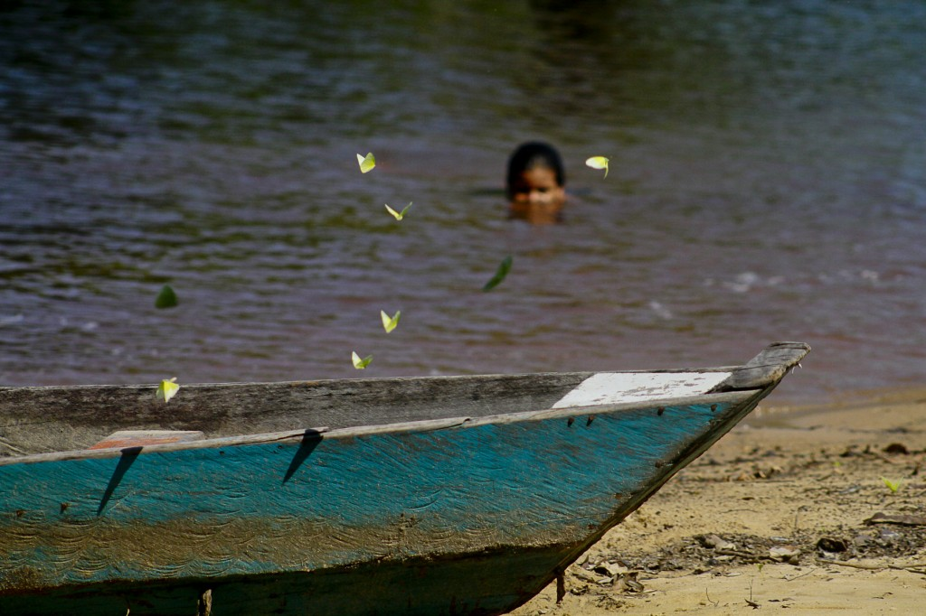 A vida nas águas do Tupé. (Foto: Alberto César Araújo/Amazônia Real)