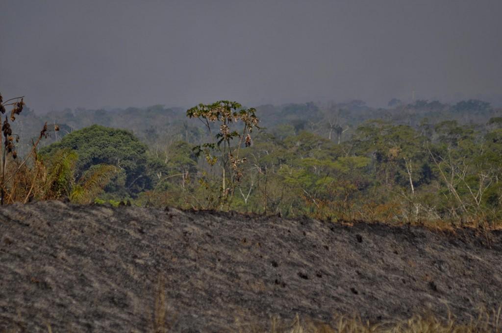 Incêndio na estrada Amadeu Barbosa no segundo Distrito de Rio Branco (Foto: Odair Leal/Amazônia Real)