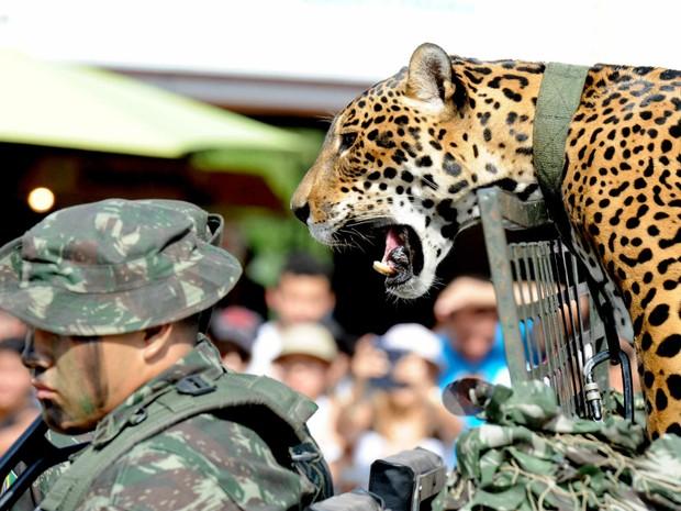 Desfile militar pela Independência em 2011 (Foto: Chico Batata/Secom)