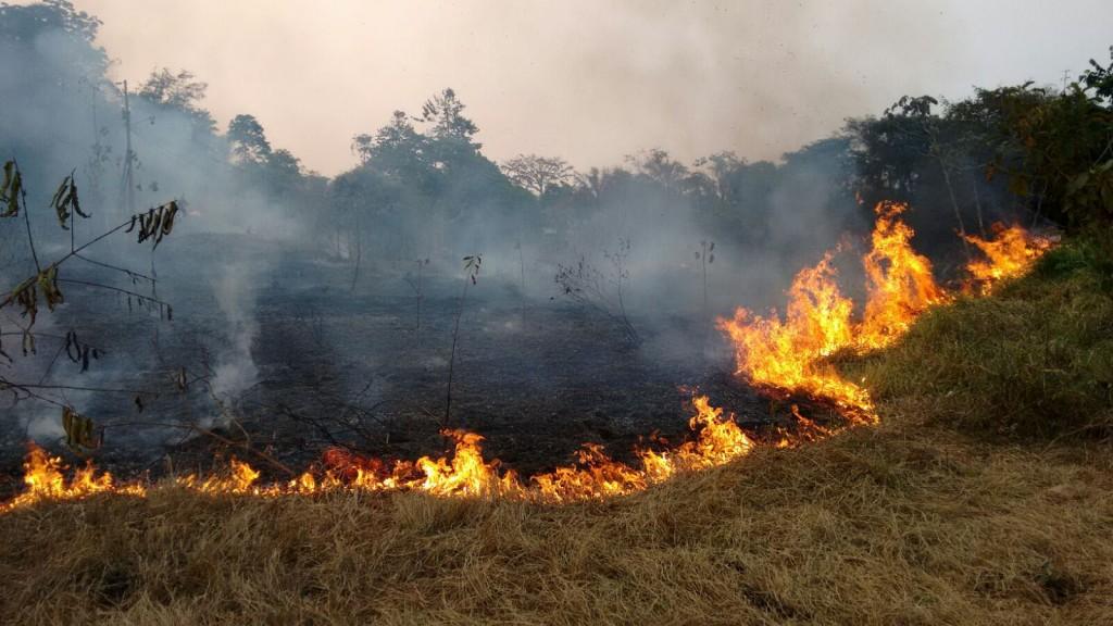 Incêndio floresta em Porto Velho (Foto: Marcela Bonfim/Amazônia Real)